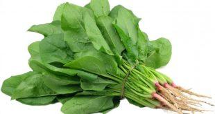 Rau chân vịt còn gọi là rau gì ? tác dụng của rau chân vịt